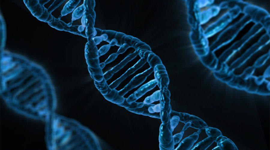 Análises Genômicas